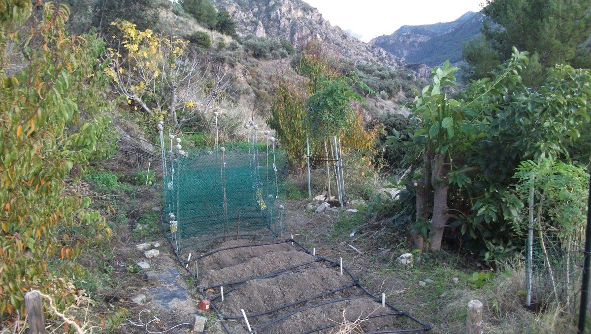 206 Vegetable terrace
